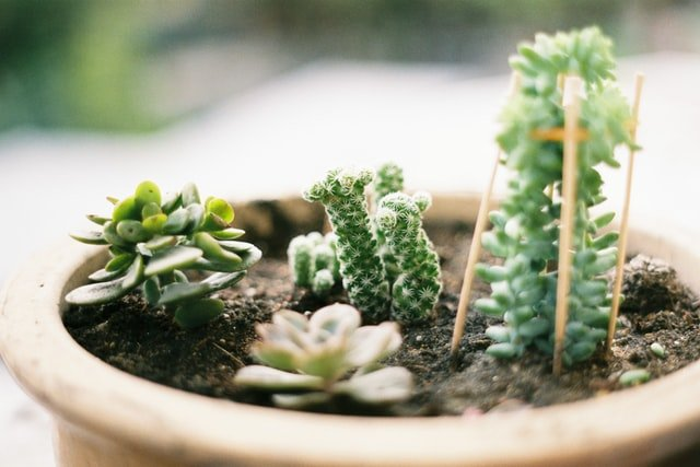 gardening soil