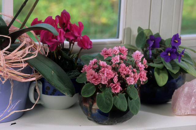 Planter for Saintpaulia Flowers