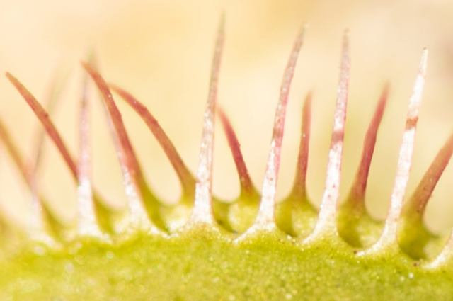 Soil for Venus Flytrap