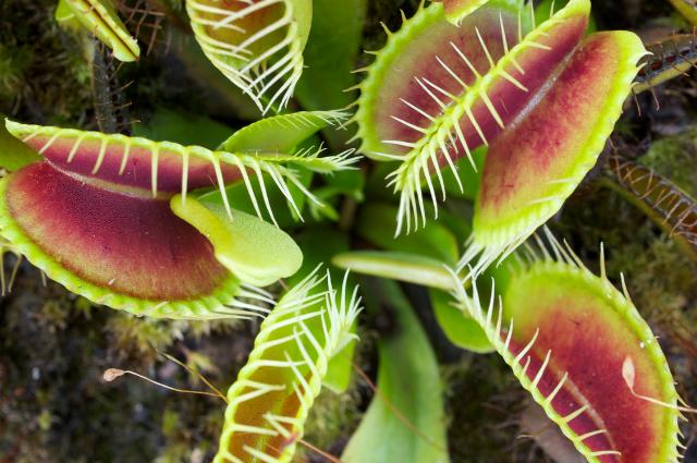 Soil for carnivorous plants