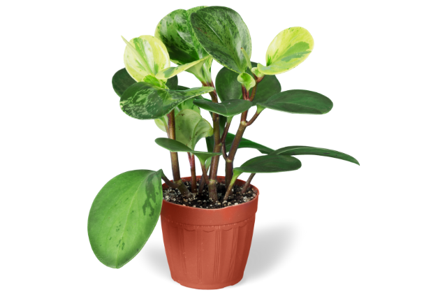 soil for pothos plant
